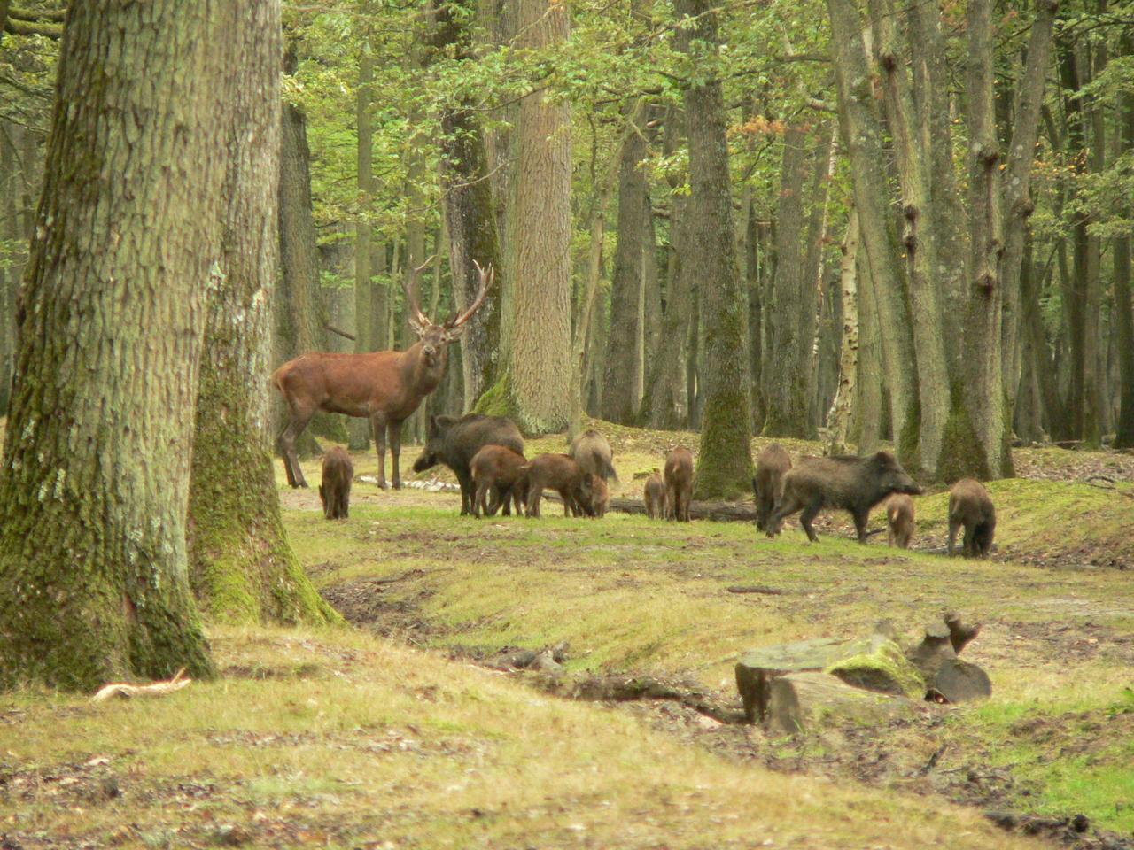 Rencontre foret rambouillet